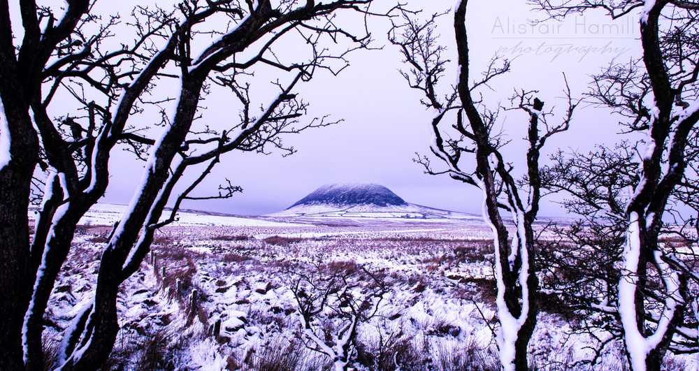 Slemish snow trees (Large) wm.jpg