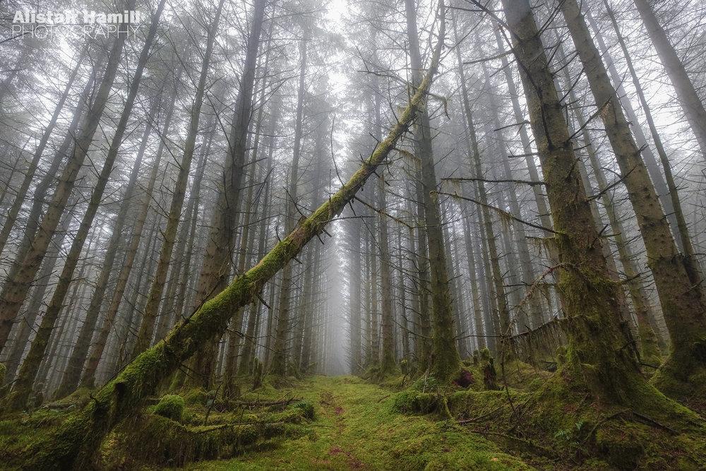 Woodland 3 (large) WM.jpg