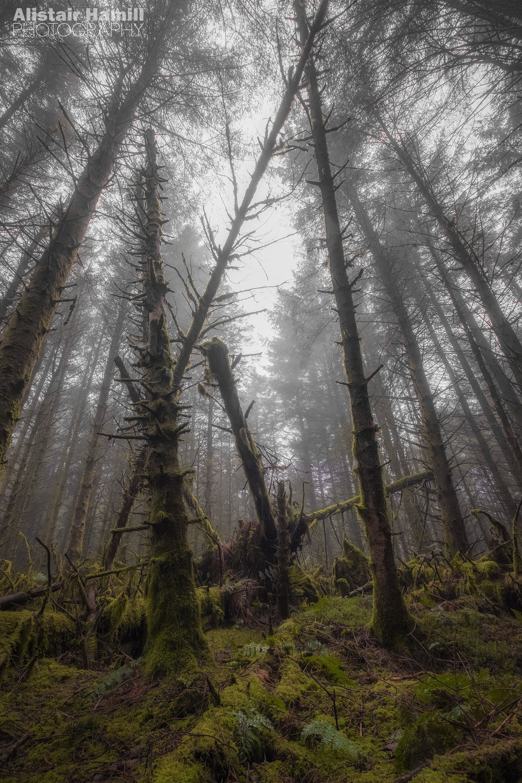 Woodland 2 (large) WM.jpg