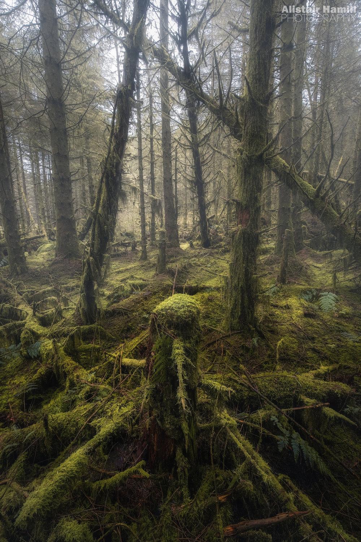 Woodland (large) WM.jpg
