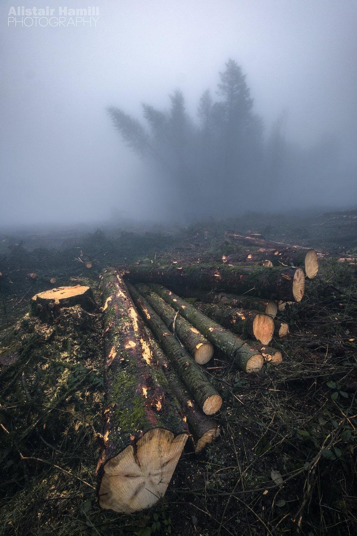 Woodland 5 (large) WM.jpg