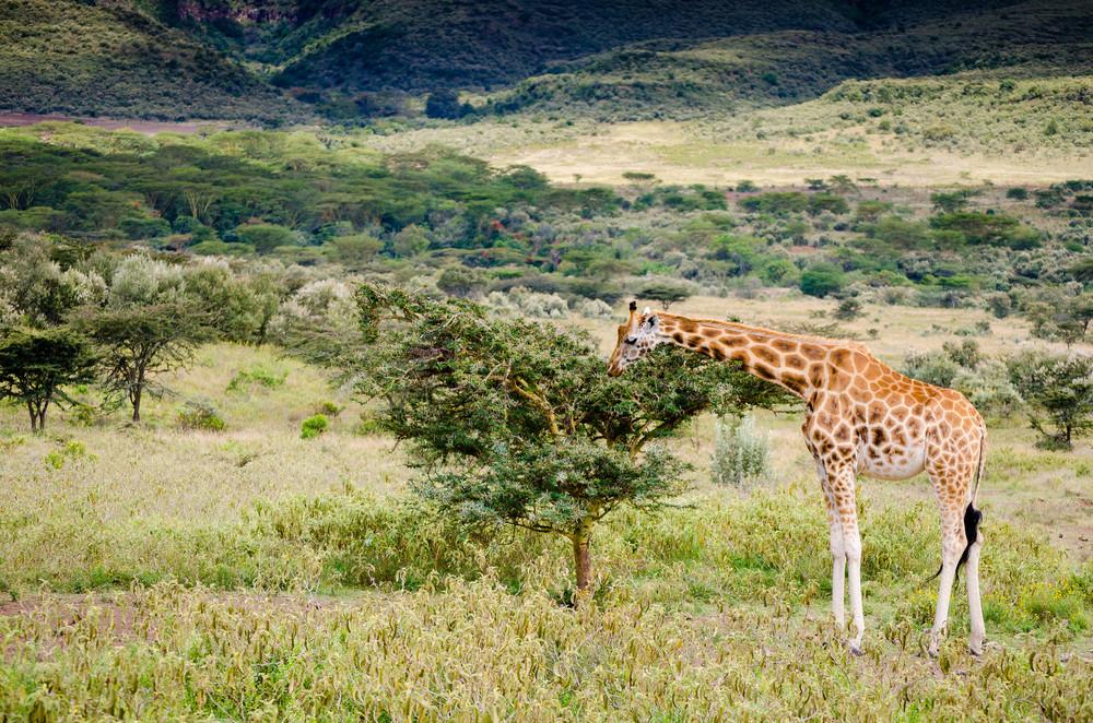 Kenya-105.jpg