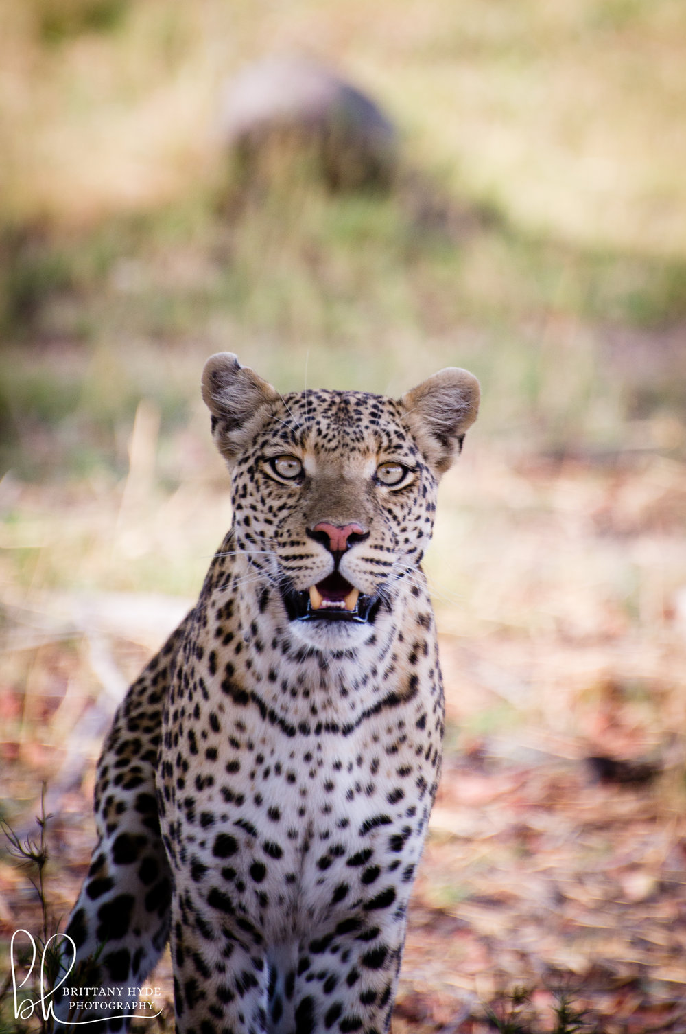 Africa-2.jpg