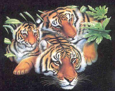 three big cats