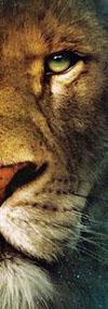 aslan eye