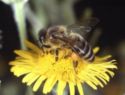 food gathering behavior of bees full
