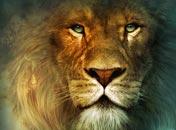 topnav aslan