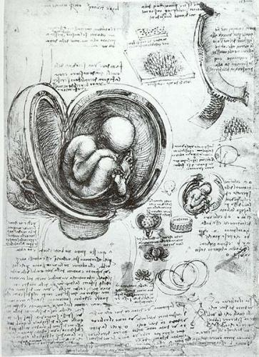 436px-leonardo_da_vinci_studies_of_embryos