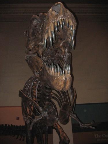 tyrannosaurus_front_view