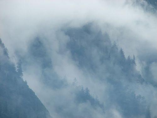 mists trees mtnside