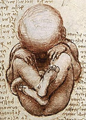 "Picture: Detail from ""Views of a Foetus in the Womb,"" a drawing by Leonardo da Vinci. Public domain via Wikimedia."