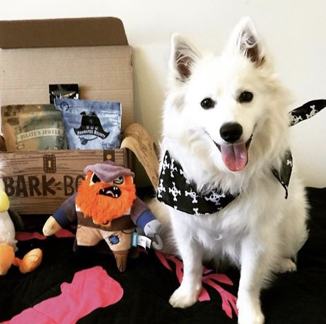 A Barkbox Subscription
