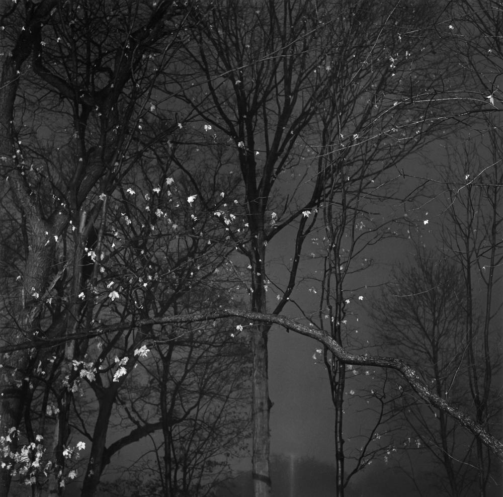 Black & White No. 2.jpg