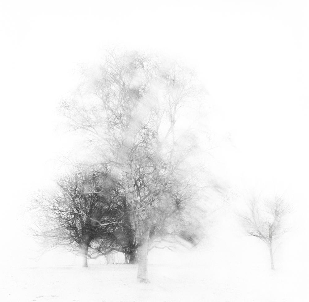 Black & White No. 3.jpg