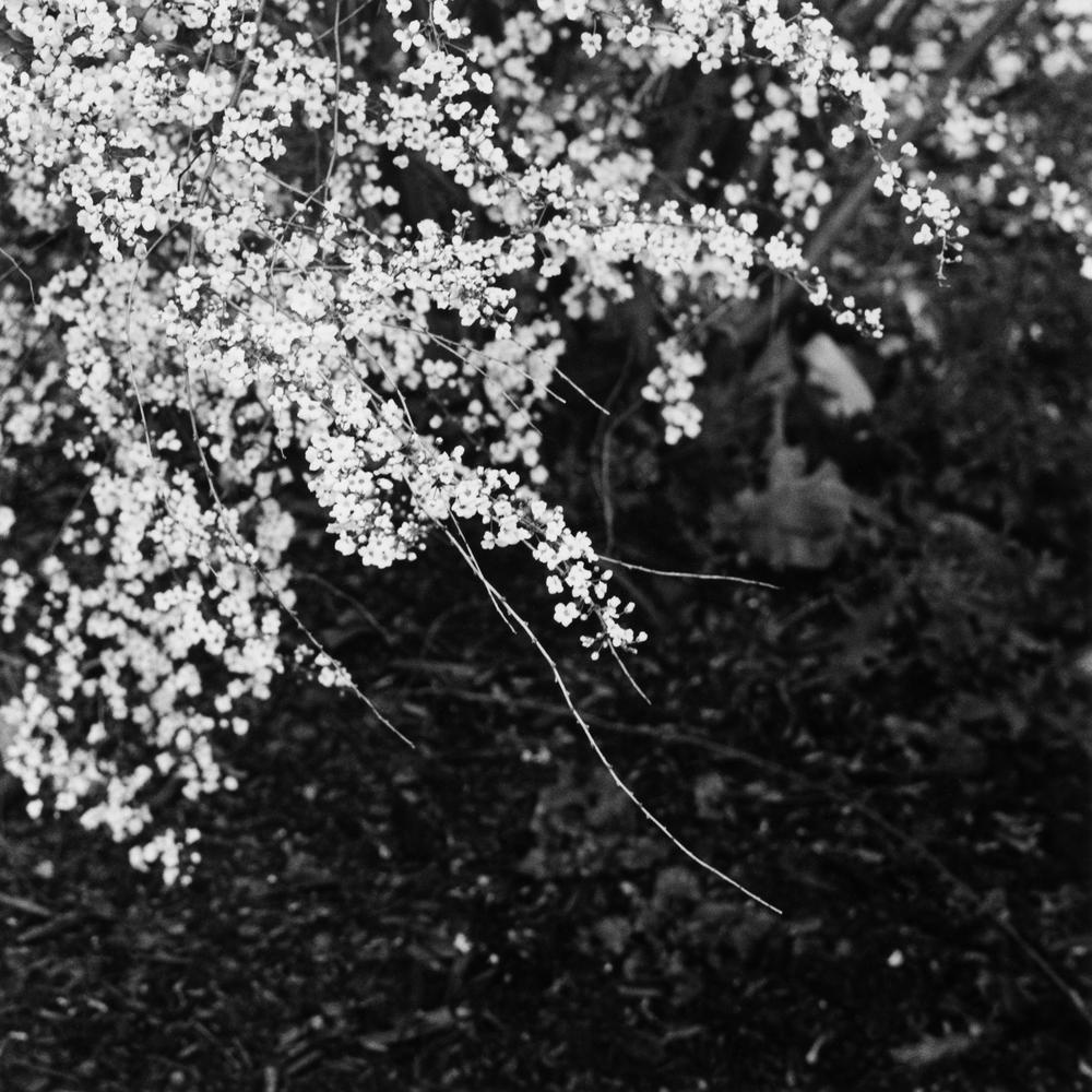 Black & White No. 13.jpg