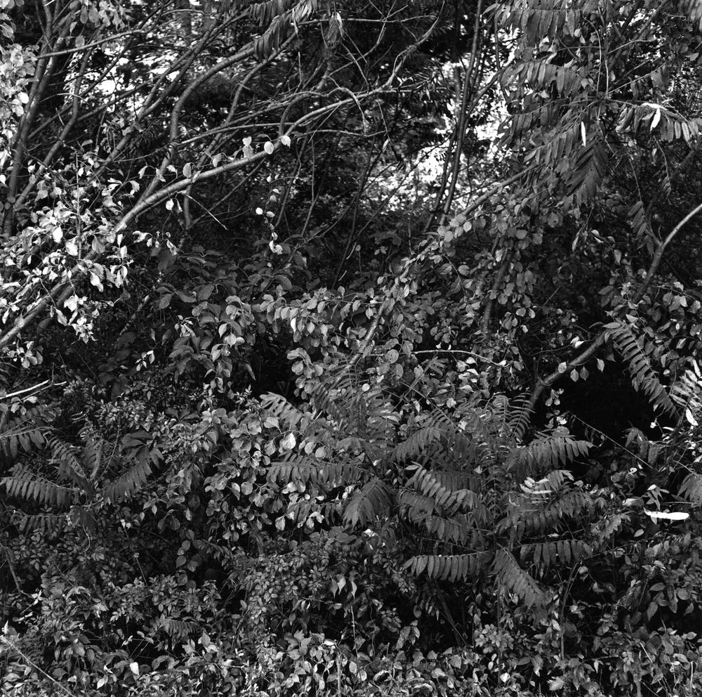 Black & White No. 15.jpg