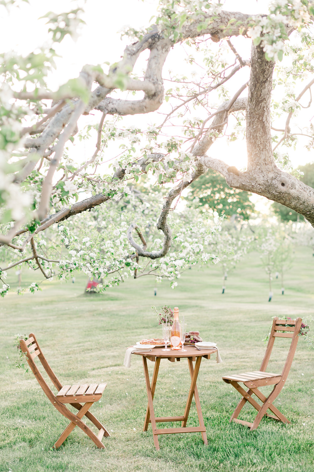 Blossoming Orchard Proposal {Editorial coming soon}