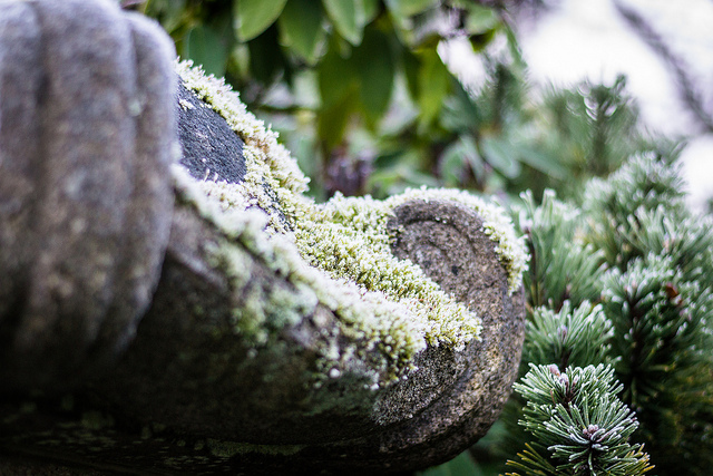 Frost on moss.