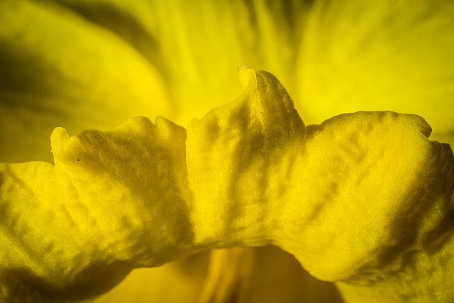 II am always amazed at the intricacies of the structure of flower petals.