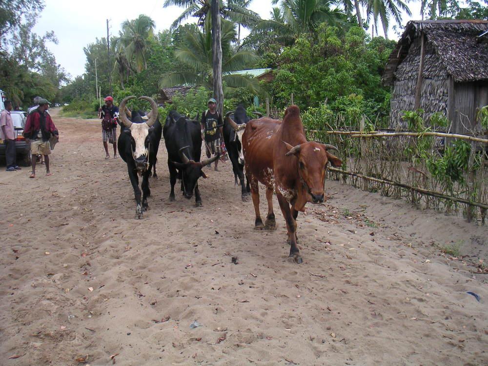 Maronsetra, Madagascar