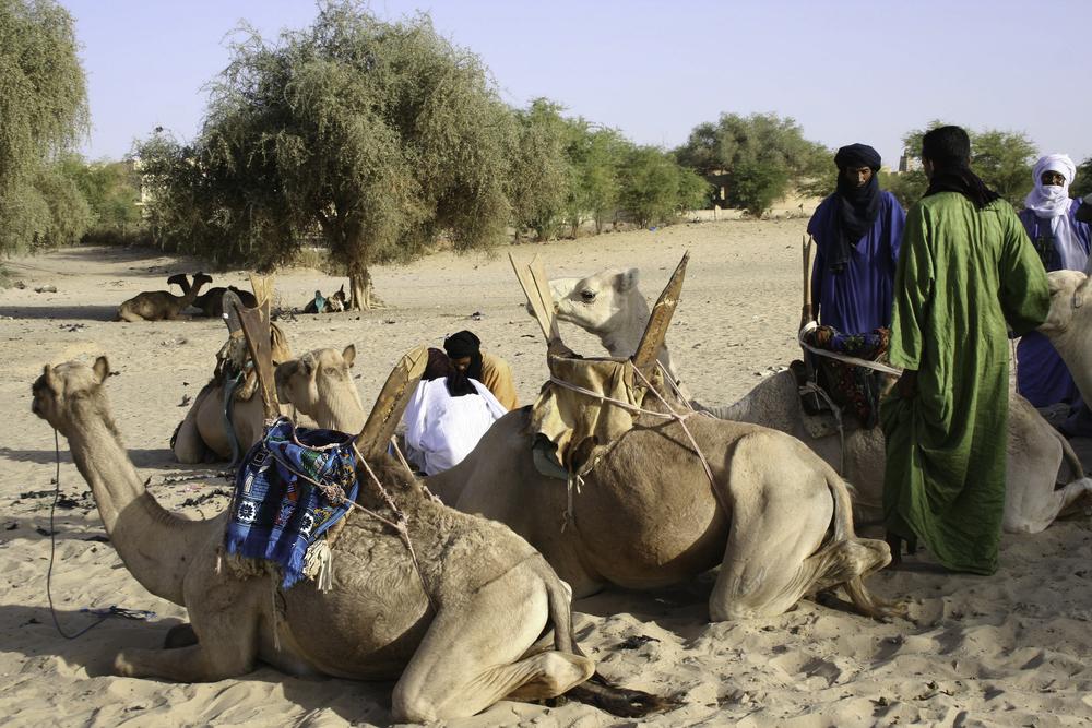 Tuaregs preparing camels for a caravan towards Taudenni