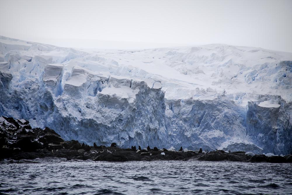 Fur Seals on Elephant Island