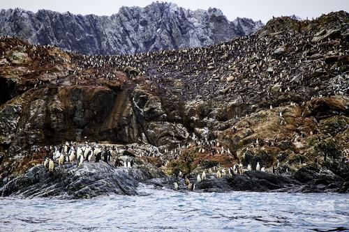 elephant-island-antarctica.jpg