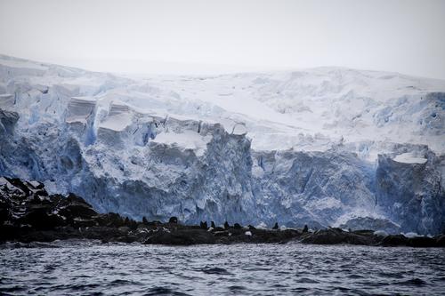 penguins-fur-seals-elephant-island.jpg