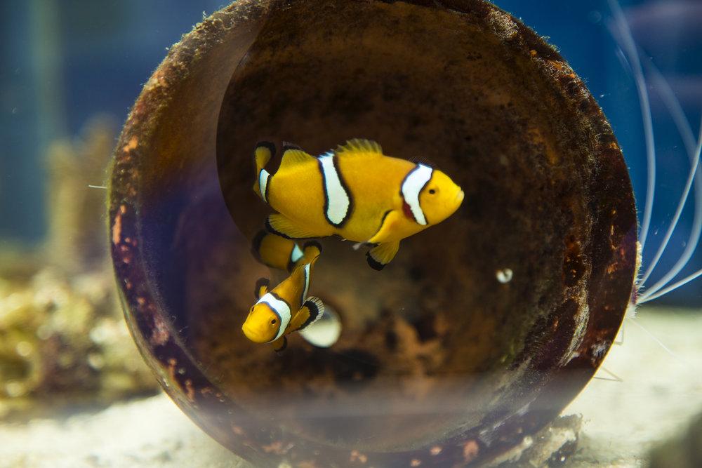 James Cook University Research Aquarium