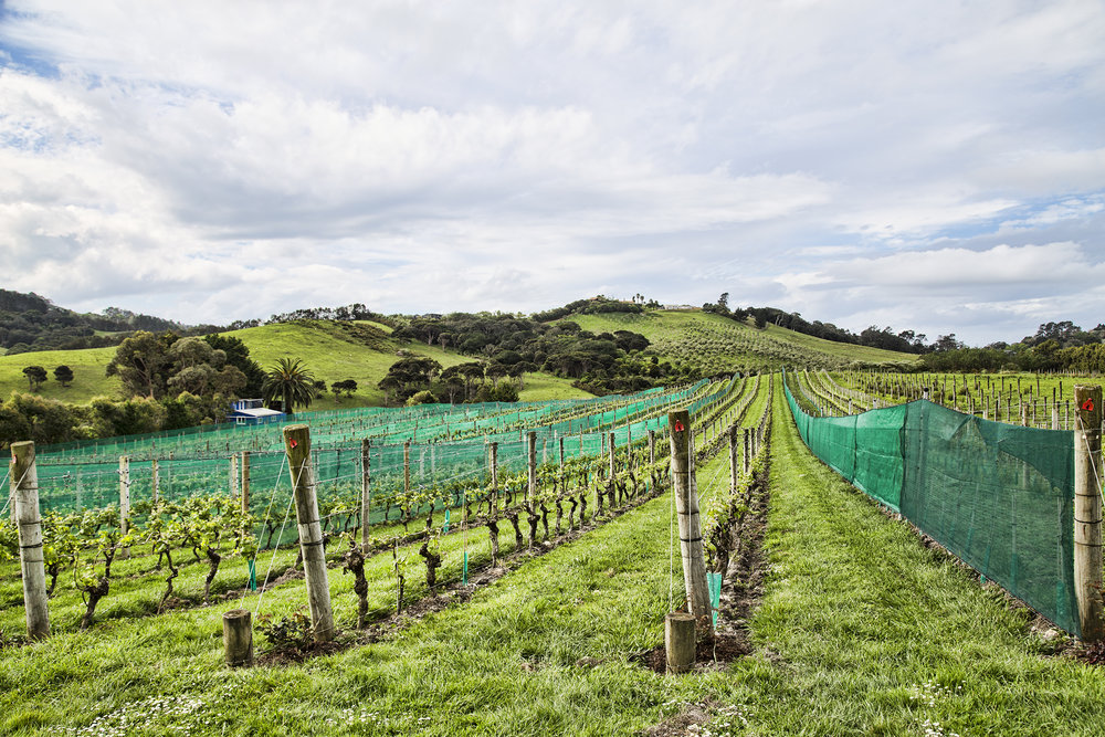Stony Ridge Winery