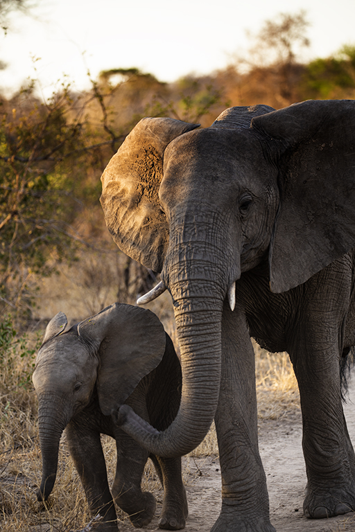 Female Elephant and Baby