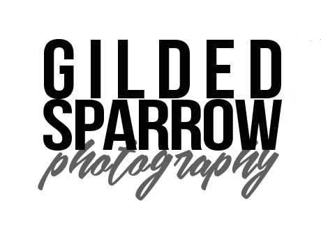GILDED SPARROW PHOTOGRAPHY