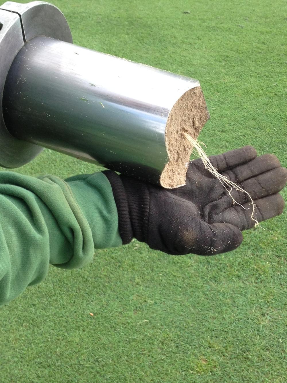 Turfgrass Aerification Roots