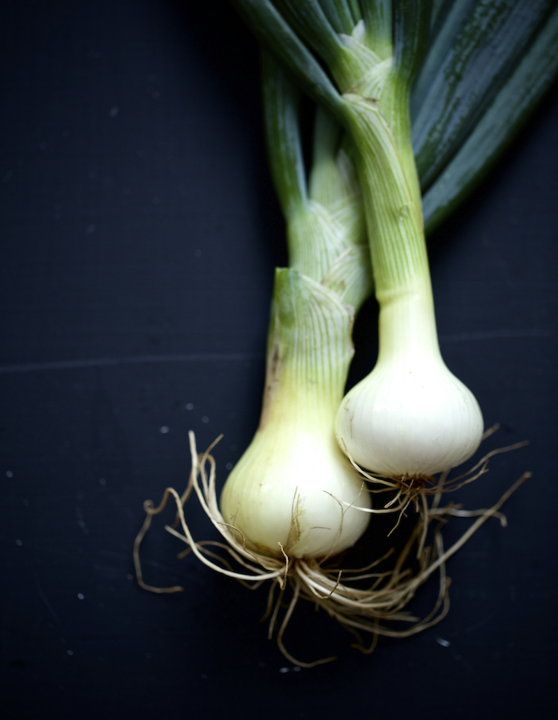 spring-onions-Evi-Abeler-Photography