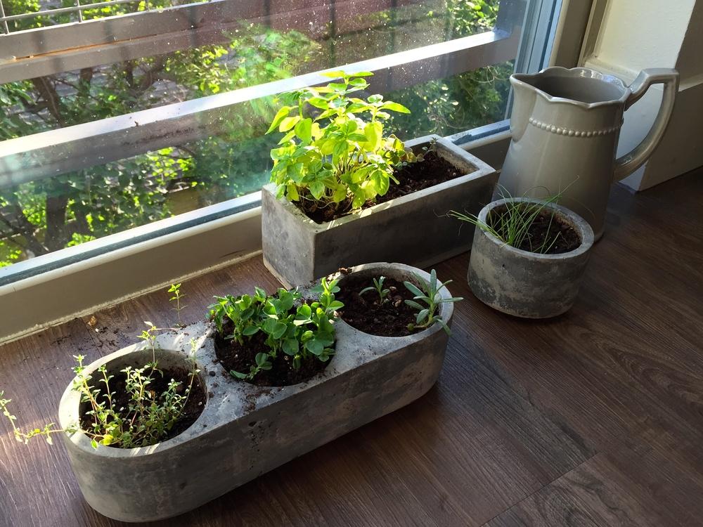 My little garden by its window