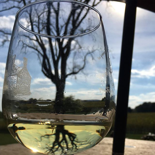 Cat in the hat? No. Tree in a glass! #winetasting #reflections #loveva
