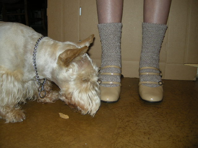 Backstage at the sock photo shoot.  Bailey found a stray Milk Bone and would not get out of the shot.