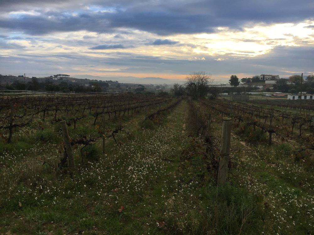 Spain Countryside.jpg