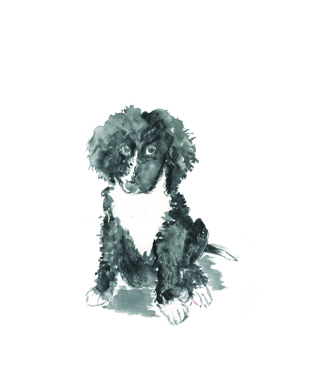 Eisenberg_Pippa_Puppy Portrait-01.jpg