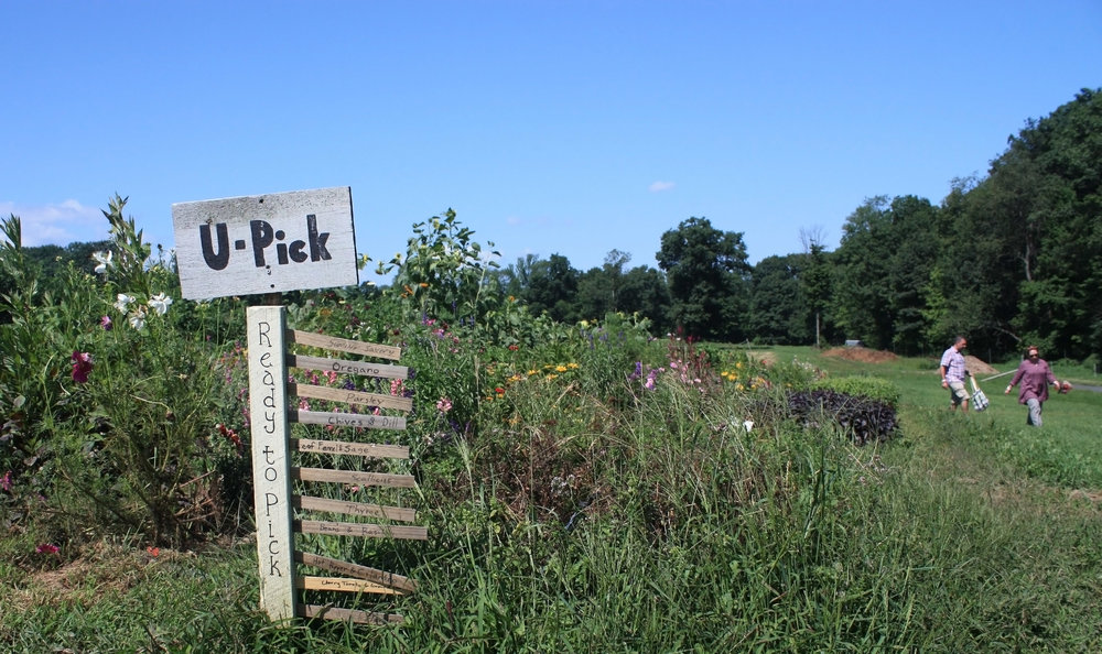 The U-Pick garden contains herbs, flowers, and cherry tomatoes.