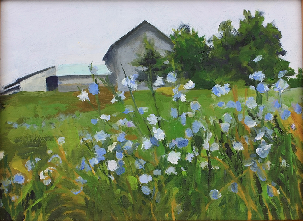 Altamont Barn in Field of Chicory
