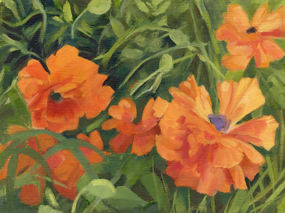 Field poppies. 8x6 oil painting on linen board. 2019