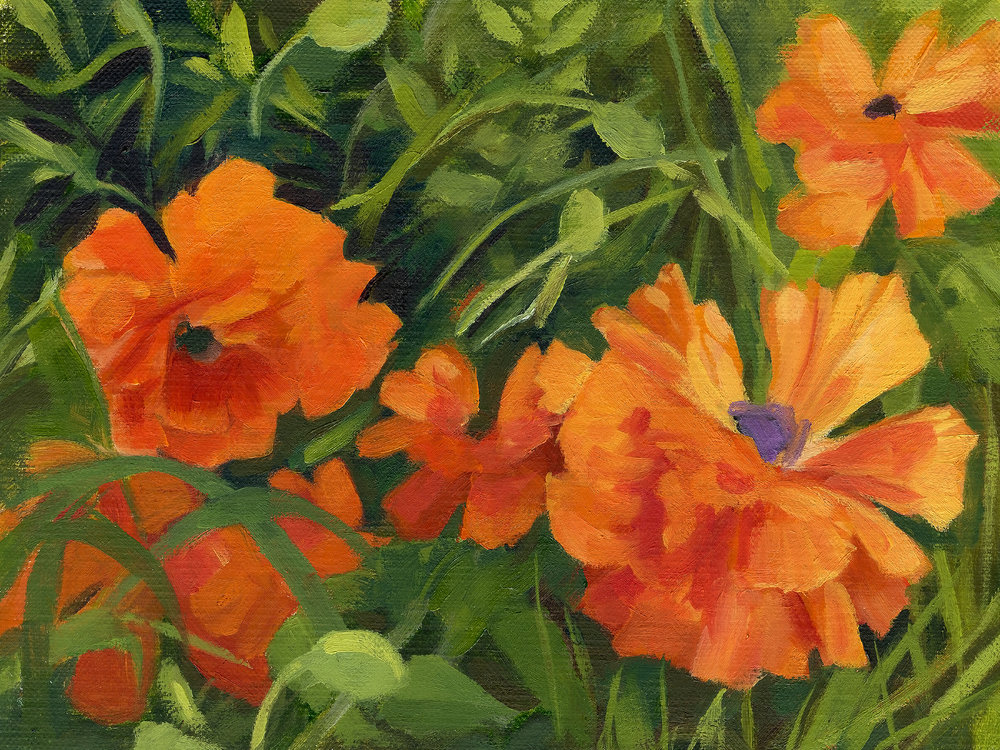 FB cover orange poppies.jpg
