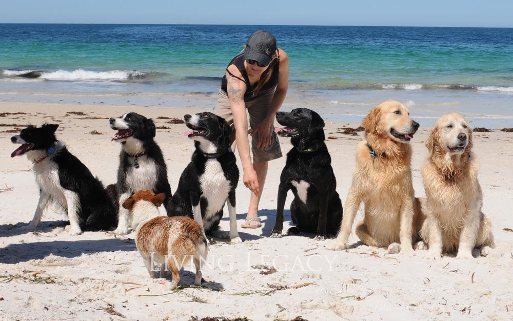 l to r: Lexi, Dougie, Bella, Ajax, Hudson, Asha and Eddie