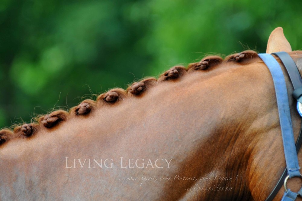 Living Legacy_4448l.jpg