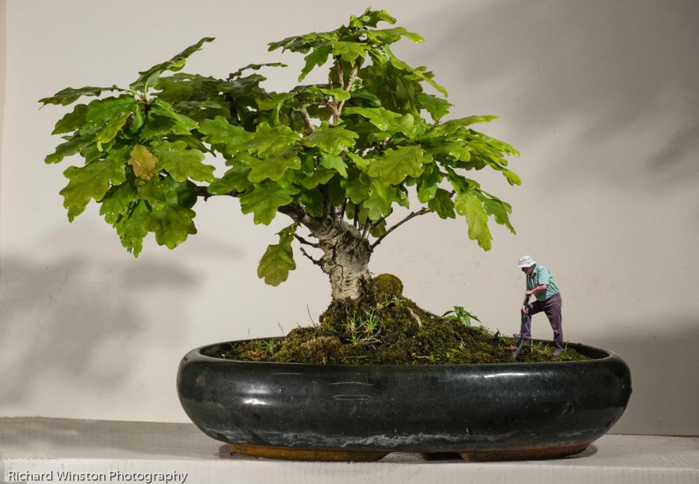 Bonsai Gardener
