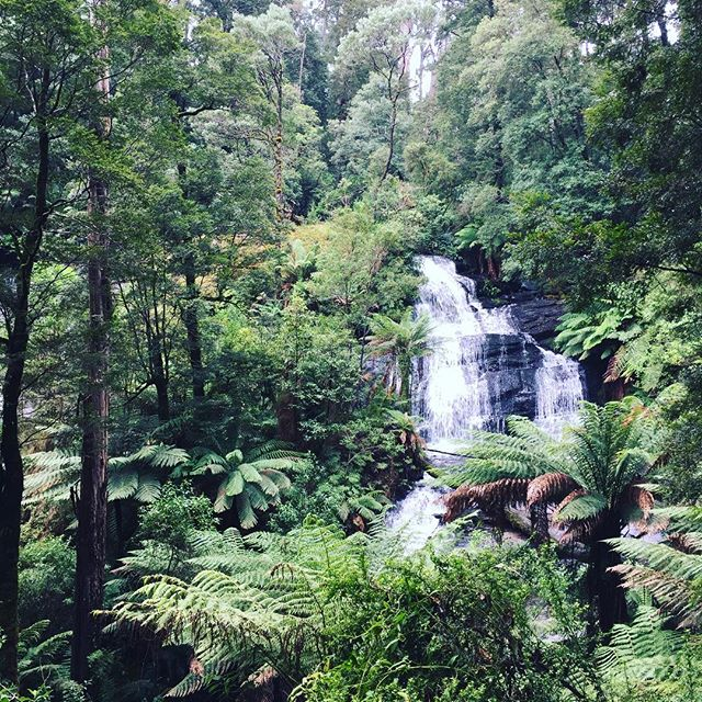 ...And some rainforest trekking 🕷🐛🐍 WE SAW KOALAS in the trees #roadtrip #greatoceanroad