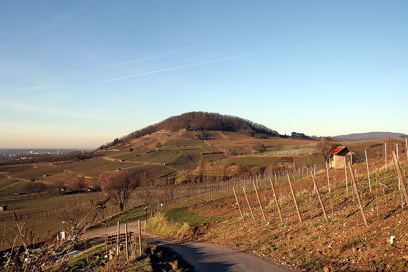 Vineyards near the town of Bensheim.