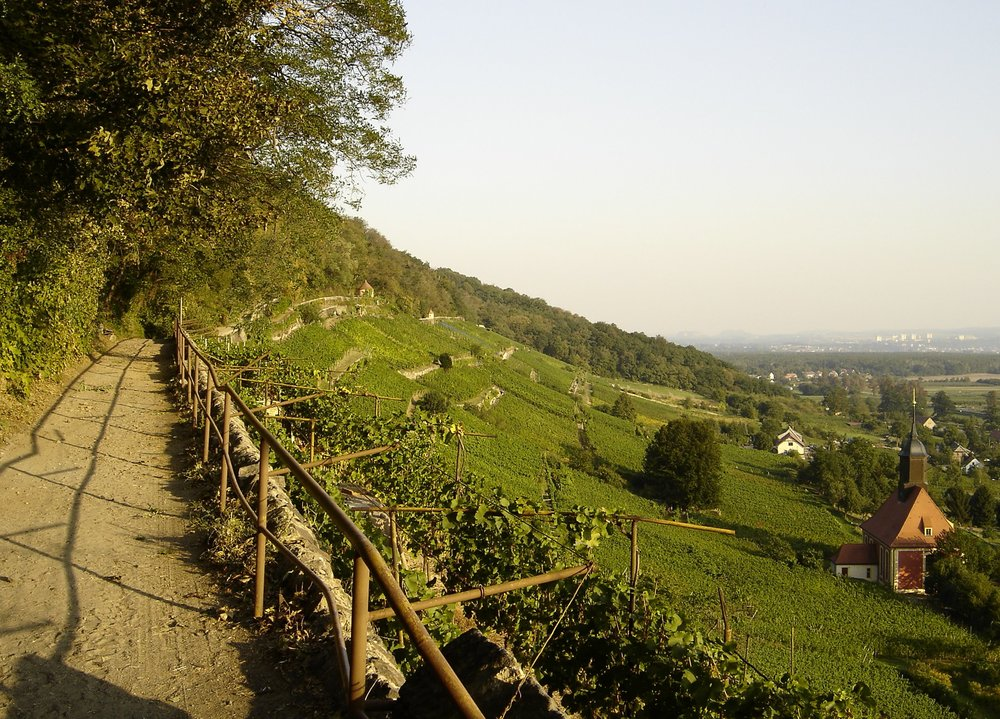 A footpath through a Sachsen vineyard in the village of Pillnitz.
