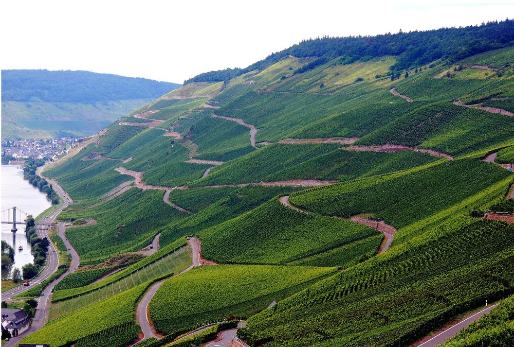 More beautiful Mosel Vineyards